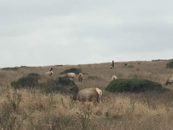 Elk 8-20-18